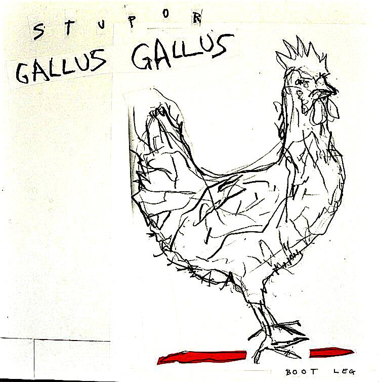 gallus-gallus